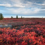 Dolly Sods Wilderness Area Autumn Red West Virginia