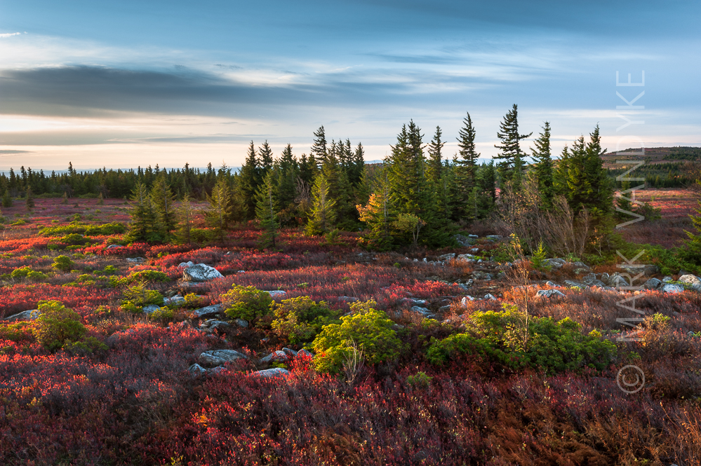 From The Field Dolly Sods Wilderness Area Autumn 2014