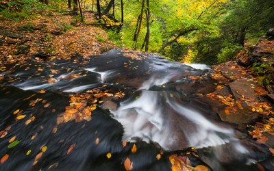 From the Field:  Ricketts Glen State Park Autumn 2014