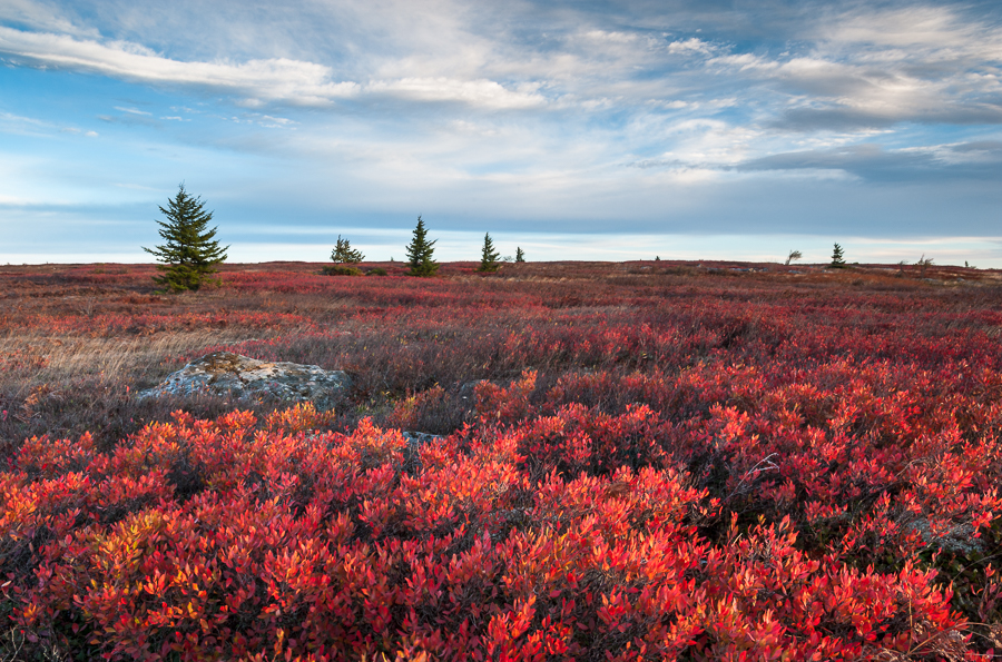 From the Field:  Dolly Sods Wilderness Area Autumn 2014