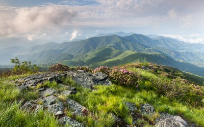 Awakening Mountains:  Spring Green Atop Grassy Ridge in the Roan Highlands