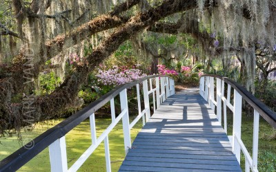 Gardening Southern Style:  Magnolia Plantation and Gardens in the Lowcountry of South Carolina