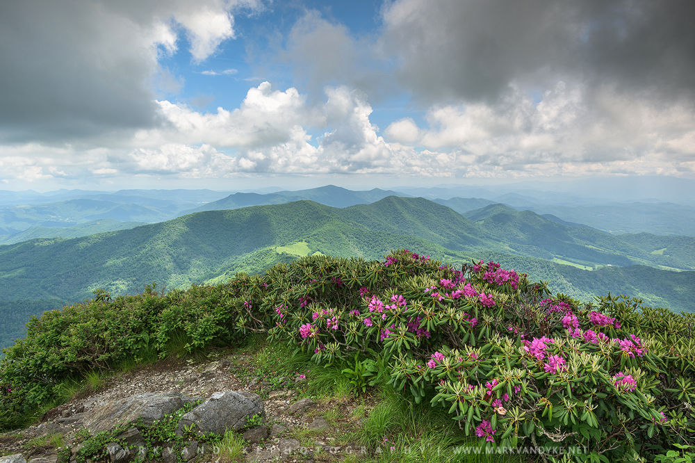 Bright Lights:  Grassy Ridge Roan Mountain Highlands 2015