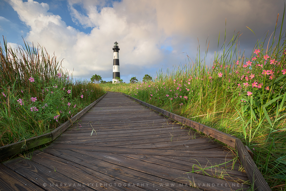 Pink: Seashore Mallow Blooms at Bodie Island Lighthouse