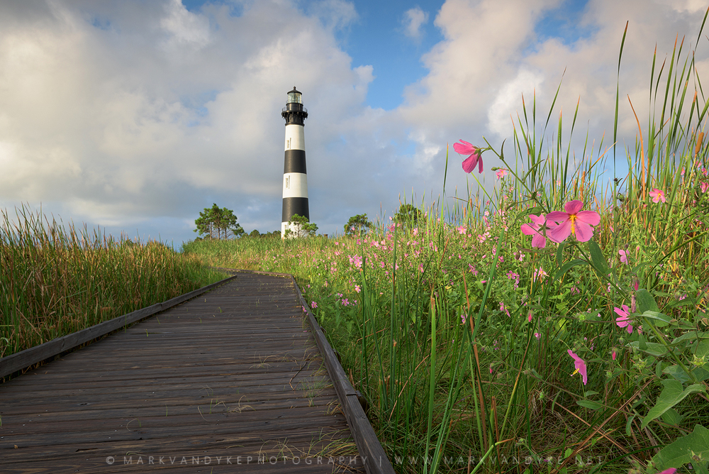 Seashore Mallow: Bodie Island Lighthouse Norht Carolina