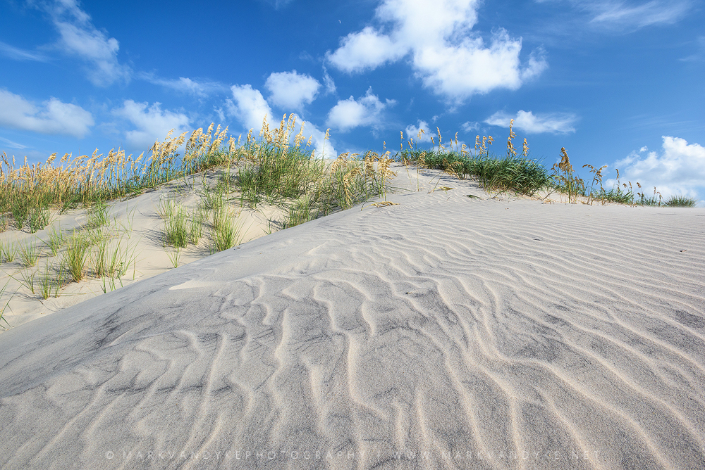 Summe Sea Oats: Pea Island National Wildlife Sanctuary North Carolina