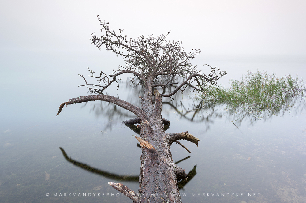 Downed tree reflecting low visibility on Flax Pond Nickerson State Park