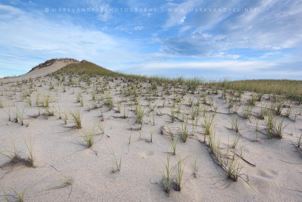 Dune Grass Provincetown Massachussets