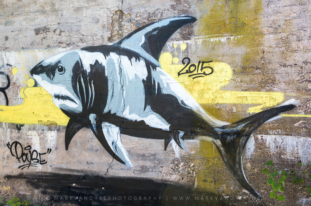 Graffiti Great White Shark Provincetown Cape Cod