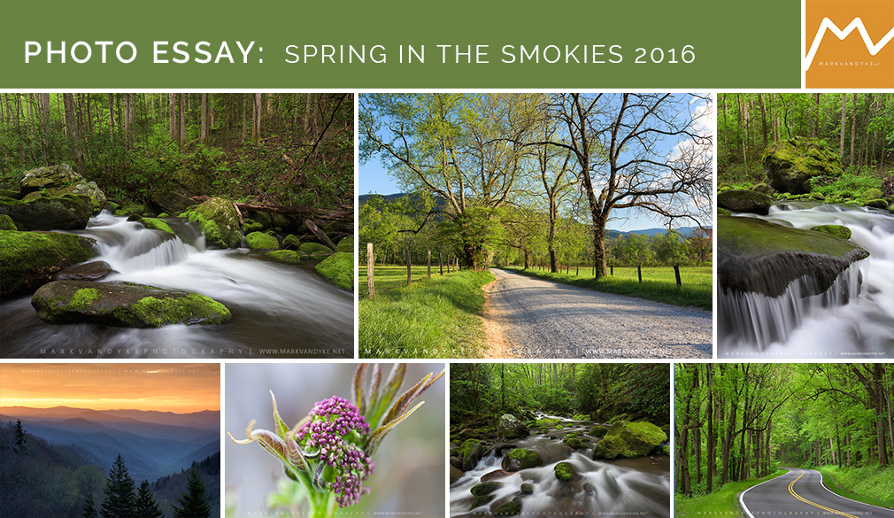 Photo Essay:  Spring in the Smokies 2016