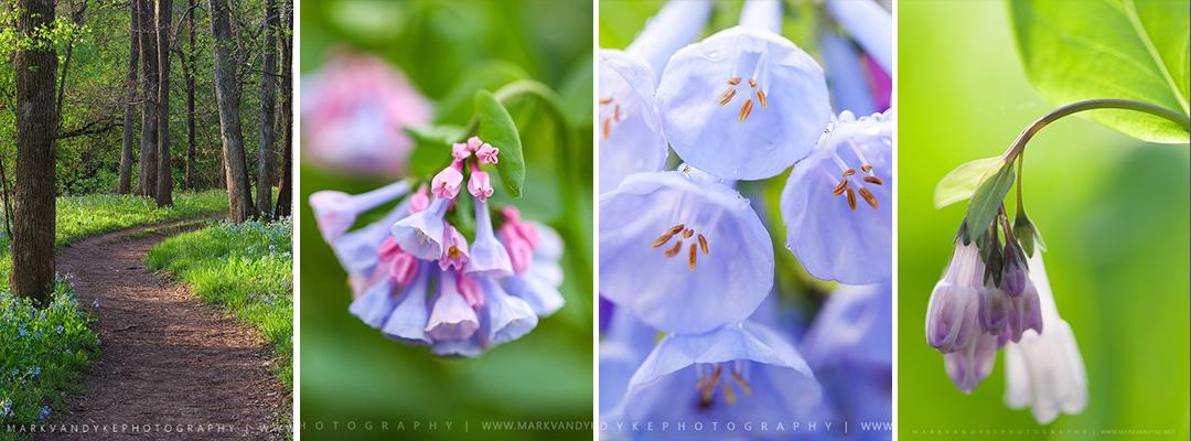 fresh flowers essay