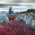Dolly Sods Bear Rocks Preserve West Virginia Autumn
