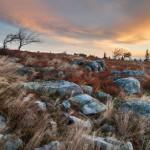 Dolly Sods West Virginia Rocky Meadow Sunrise